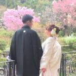 桜 (2)